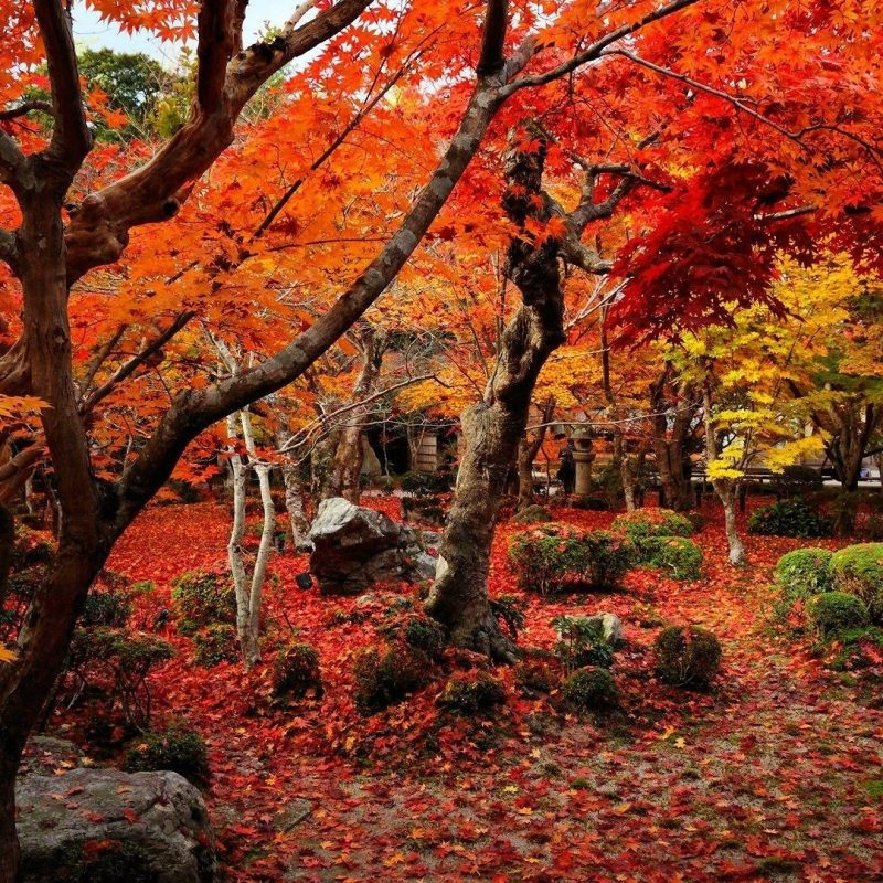 10 Best Hd Autumn Wallpapers 1080P FULL HD 1920×1080 For PC Desktop 2021 free download autumn wallpapers 1920x1080 wallpaper cave 1 800x800