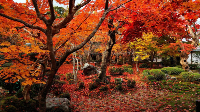 10 Top Autumn Hd Wallpaper 1080P FULL HD 1080p For PC Desktop 2018 free download autumn wallpapers 1920x1080 wallpaper cave 2 800x450