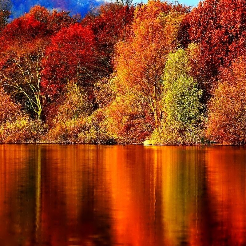 10 Latest Autumn Wallpaper For Pc FULL HD 1080p For PC Background 2021 free download autumn wallpapers wide desktop www walldes download d0b5d181d0b5d0bd 800x800