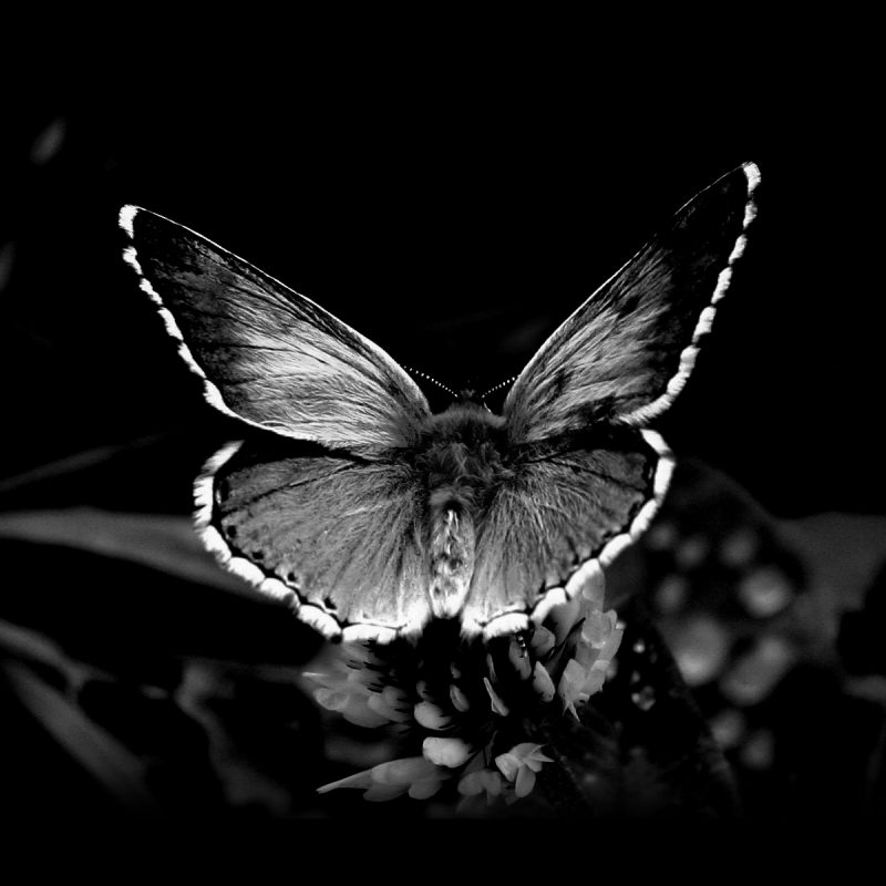 10 Best Butterfly Wallpaper Black And White FULL HD 1920×1080 For PC Desktop 2018 free download awesome black and white butterfly wallpaper hd 765 wallpaper high 800x800