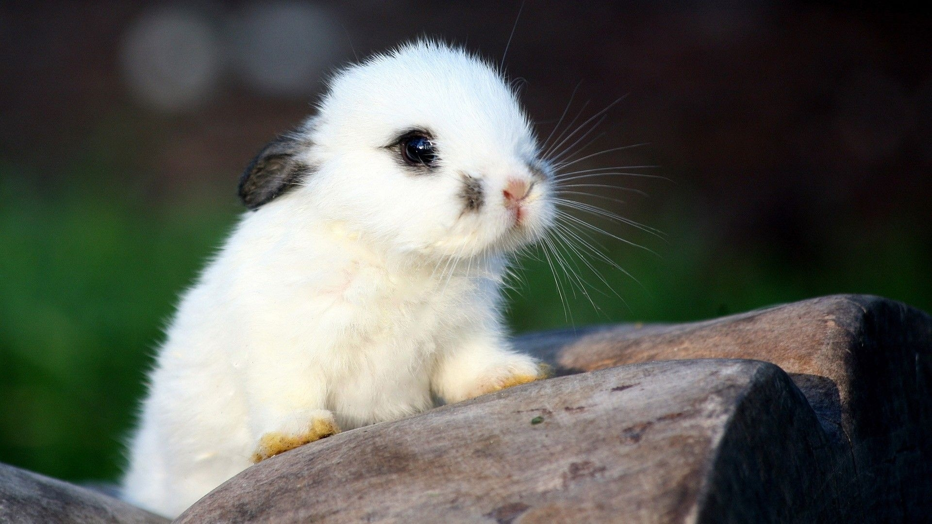baby animal wallpaper hd images – one hd wallpaper pictures