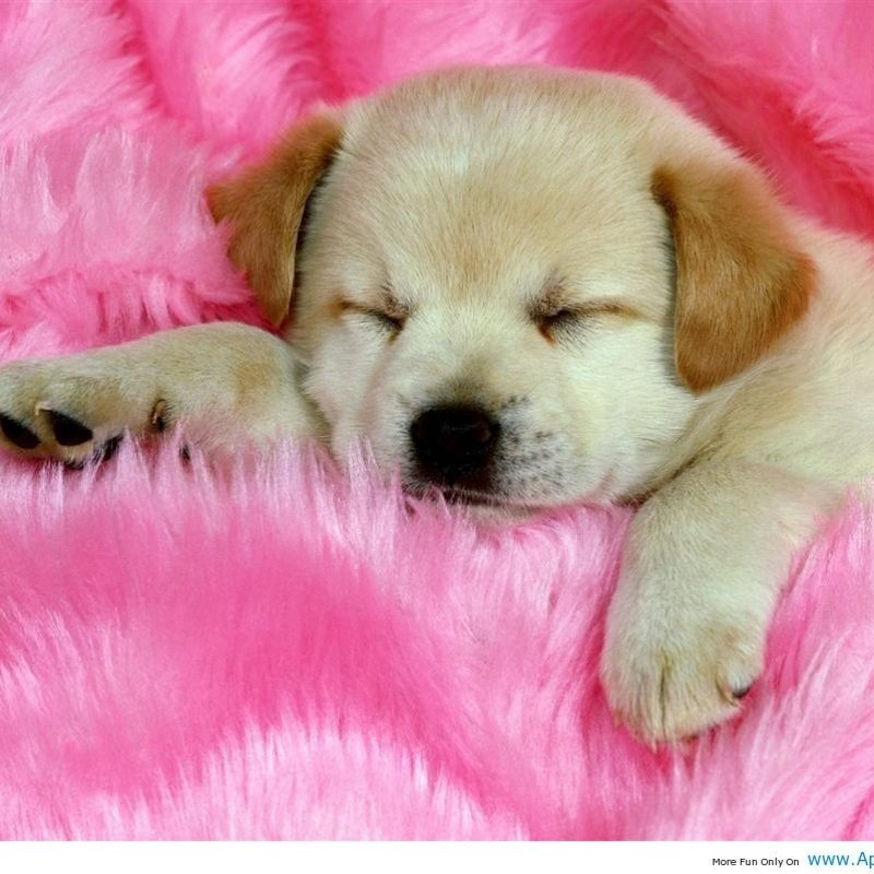 10 Top Images Of Cute Baby Dogs FULL HD 1920×1080 For PC Desktop 2018 free download baby dog wallpapers wallpaper cave 800x800