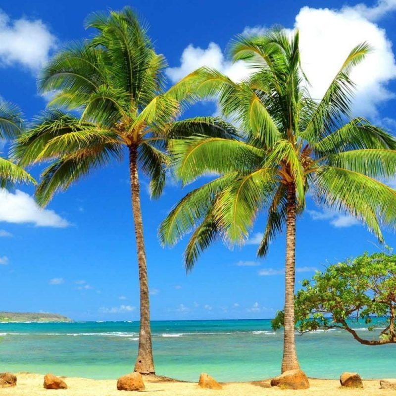 10 Most Popular Beautiful Beach Backgrounds Palm Trees FULL HD 1920×1080 For PC Desktop 2020 free download backgrounds amazing nature tree hd zibrato with trees on sea beach 800x800