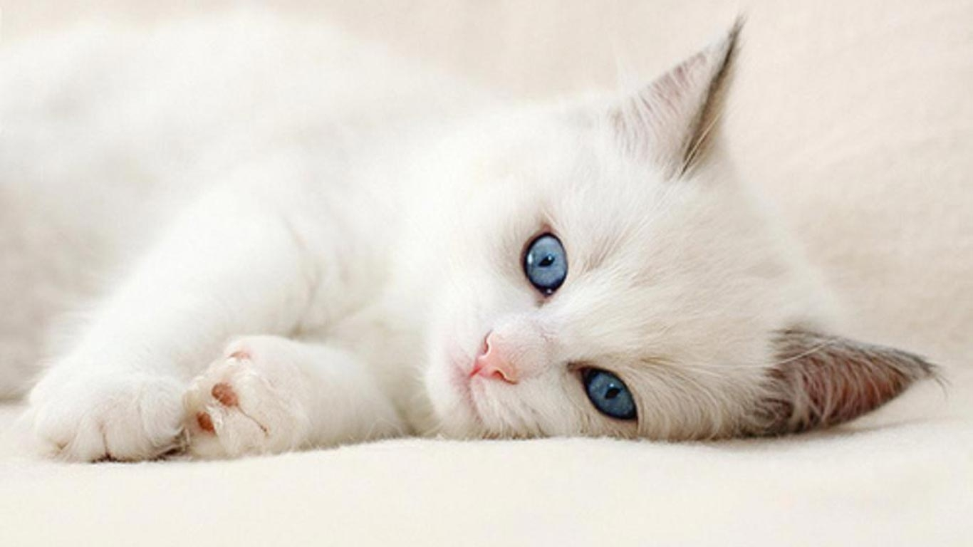 backgrounds cute cat amp pics hd only with wallpaper of cats in for