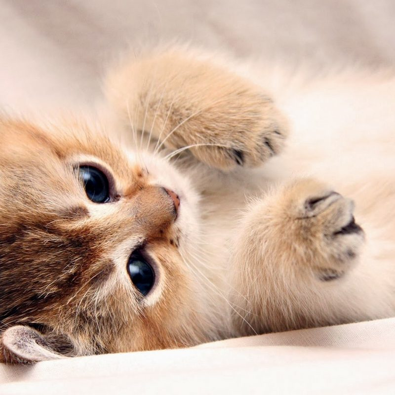 10 Best Hd Cute Cat Wallpapers FULL HD 1080p For PC Desktop 2018 free download backgrounds cute cat with wallpaper of cats in hd high quality for 1 800x800