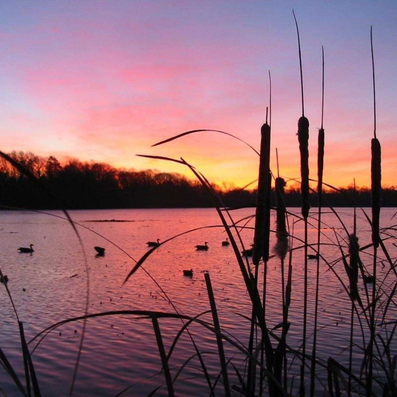 10 Most Popular Duck Hunting Iphone Wallpaper FULL HD 1920×1080 For PC Desktop 2018 free download backgrounds for duck hunting wallpaper high resolution iphone 800x800