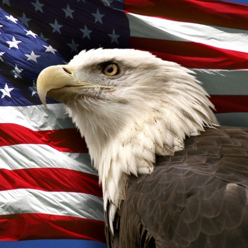 10 New American Bald Eagle Wallpaper FULL HD 1920×1080 For PC Desktop 2018 free download bald eagle flag pics 800x800