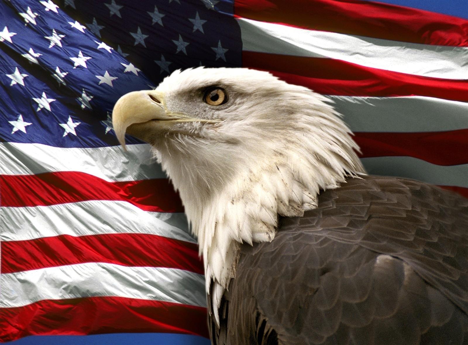 10 New American Bald Eagle Wallpaper FULL HD 1920×1080 For ...