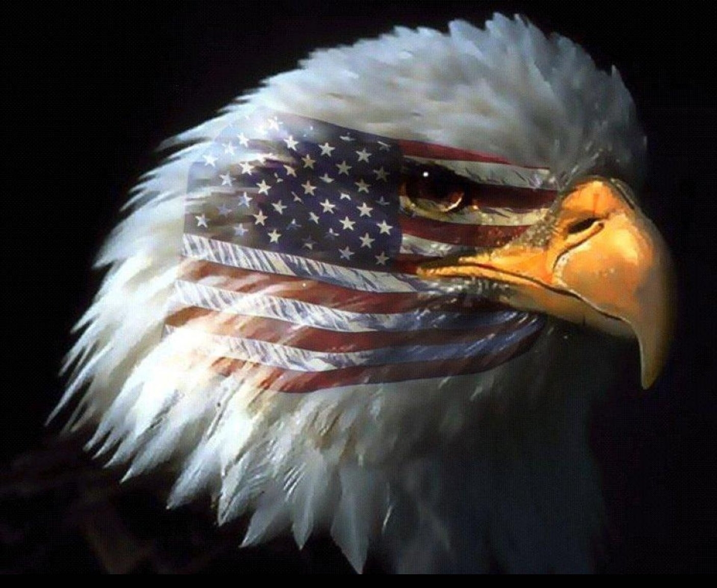bald eagle wallpaper 015