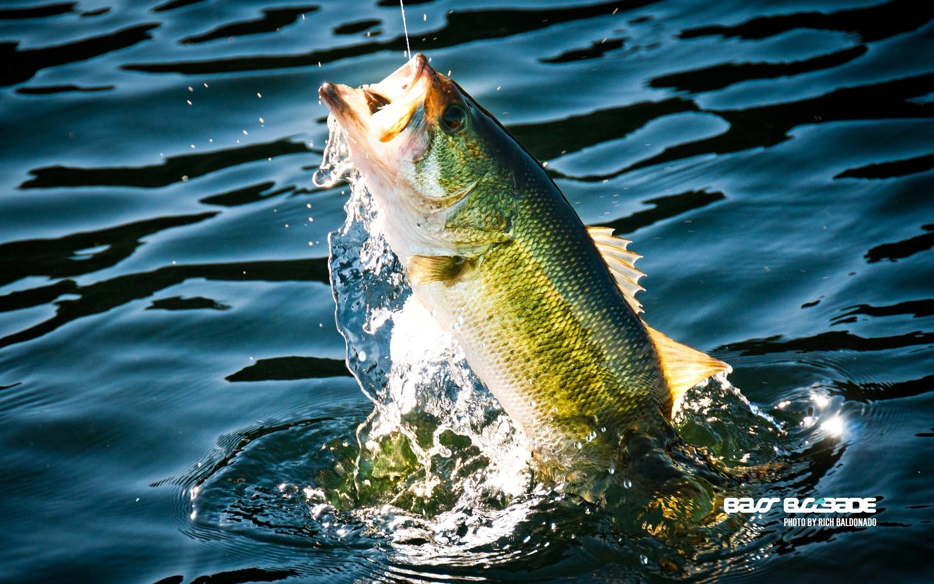 bass fishing wallpaper for iphone (52+ images)