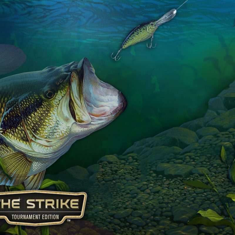 10 Latest Bass Fishing Wallpaper Hd FULL HD 1080p For PC Desktop 2021 free download bass fishing wallpaper hd 62 images 1 800x800