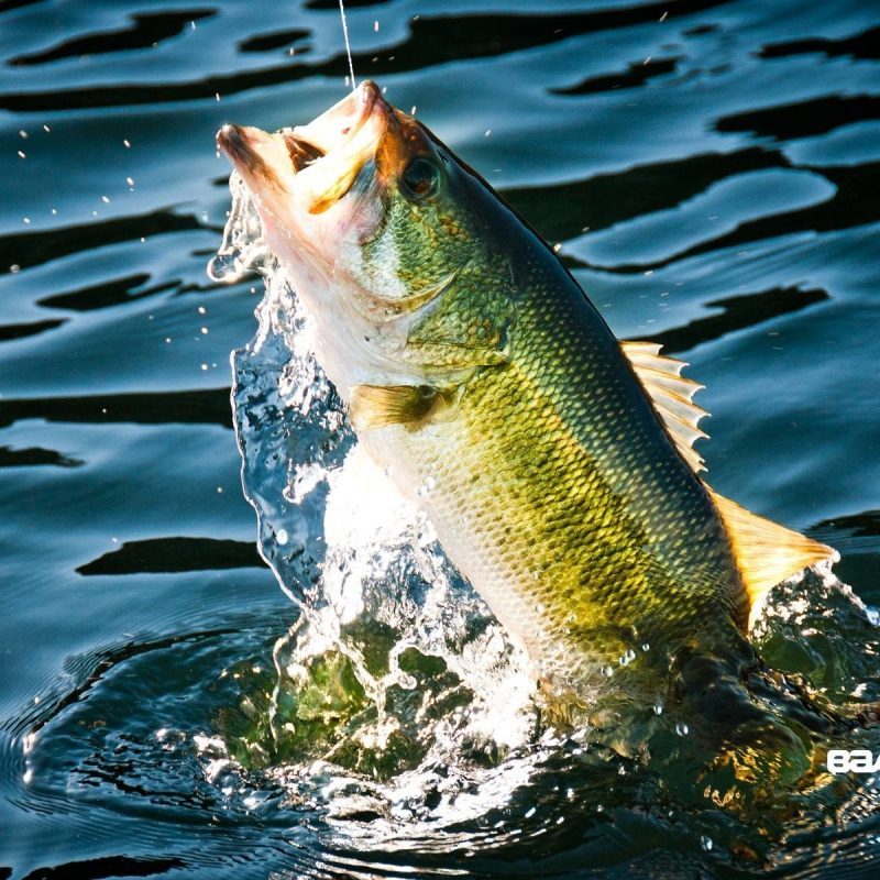10 Most Popular Bass Fishing Screen Savers FULL HD 1080p For PC Background 2021 free download bass fishing wallpaper hd 62 images 800x800