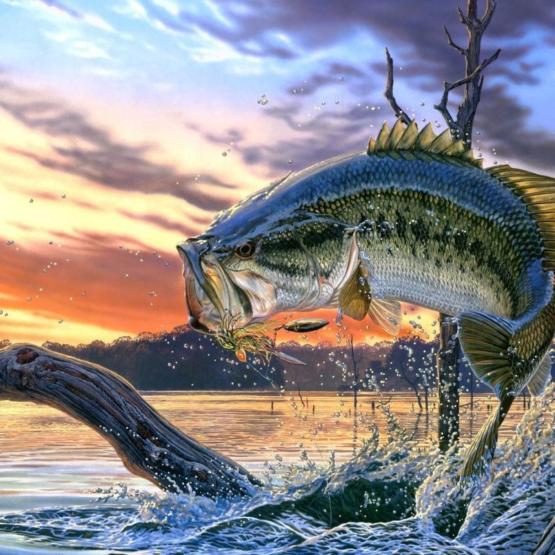 10 Most Popular Bass Fishing Screen Saver FULL HD 1920×1080 For PC Background 2021 free download bass images of fish largemouth bass fishing wallpaper background 1 800x800