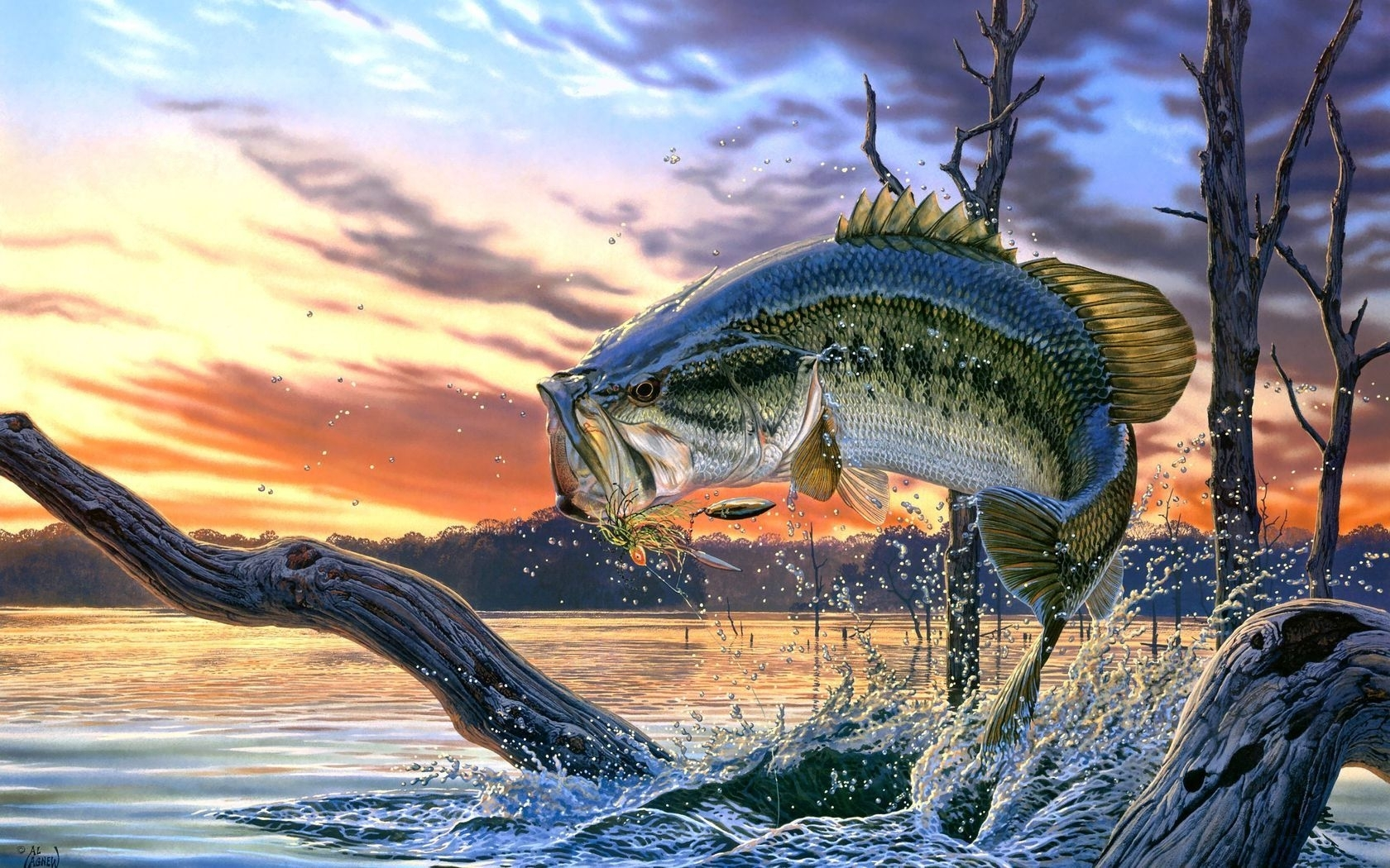 bass images of fish | largemouth bass fishing wallpaper background
