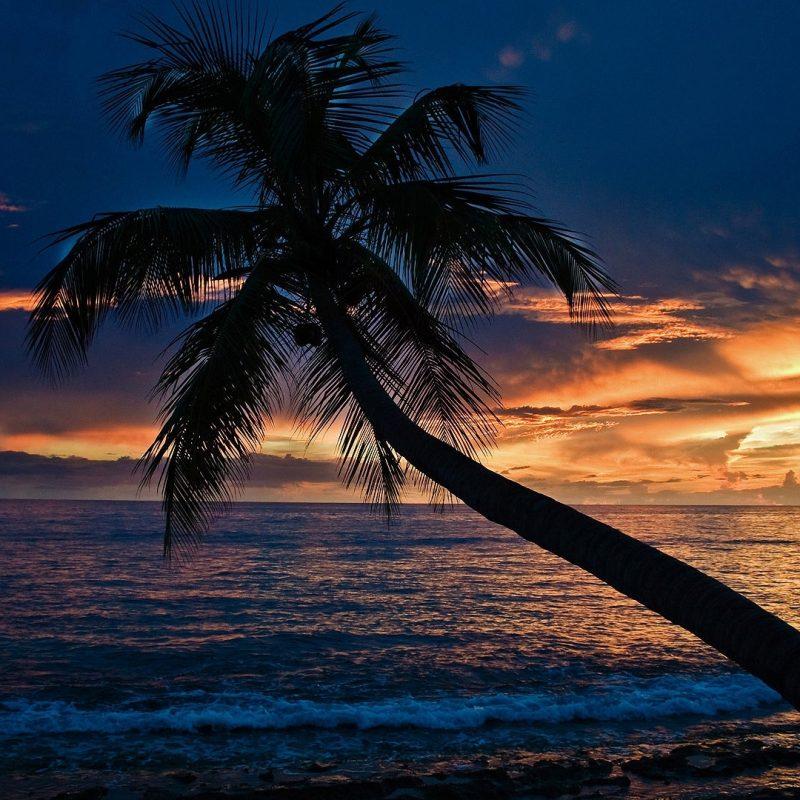 10 New Beach At Night Wallpaper FULL HD 1080p For PC Background 2020 free download beach at night hd wallpaper media file pixelstalk 800x800