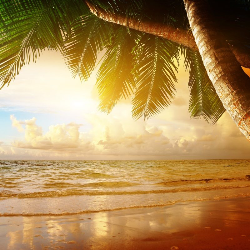 10 Latest Summer Beach Sunset Wallpaper FULL HD 1080p For PC Background 2020 free download beach coast tropical ocean sunset palm paradise summer sea wallpaper 800x800