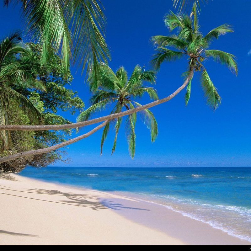 10 New Beach Palm Tree Background FULL HD 1080p For PC Background 2020 free download %name