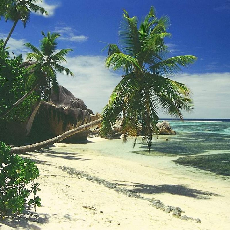 10 Most Popular Beautiful Beach Backgrounds Palm Trees FULL HD 1920×1080 For PC Desktop 2020 free download beach palm tree background hd wallpapers pulse 800x800