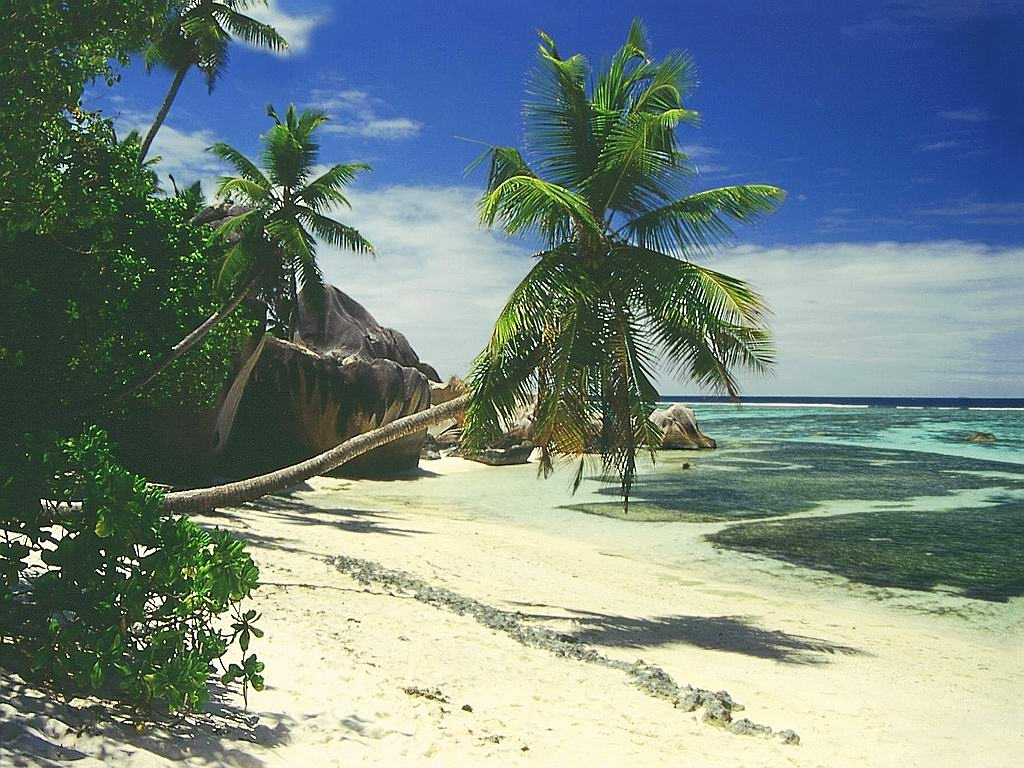 10 Most Popular Beautiful Beach Backgrounds Palm Trees