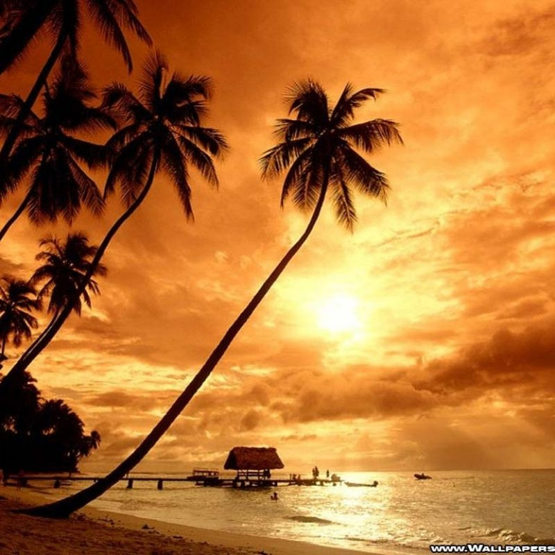 10 Latest Summer Beach Sunset Wallpaper FULL HD 1080p For PC Background 2020 free download beach sunsets wallpapers wallpaper cave 800x800