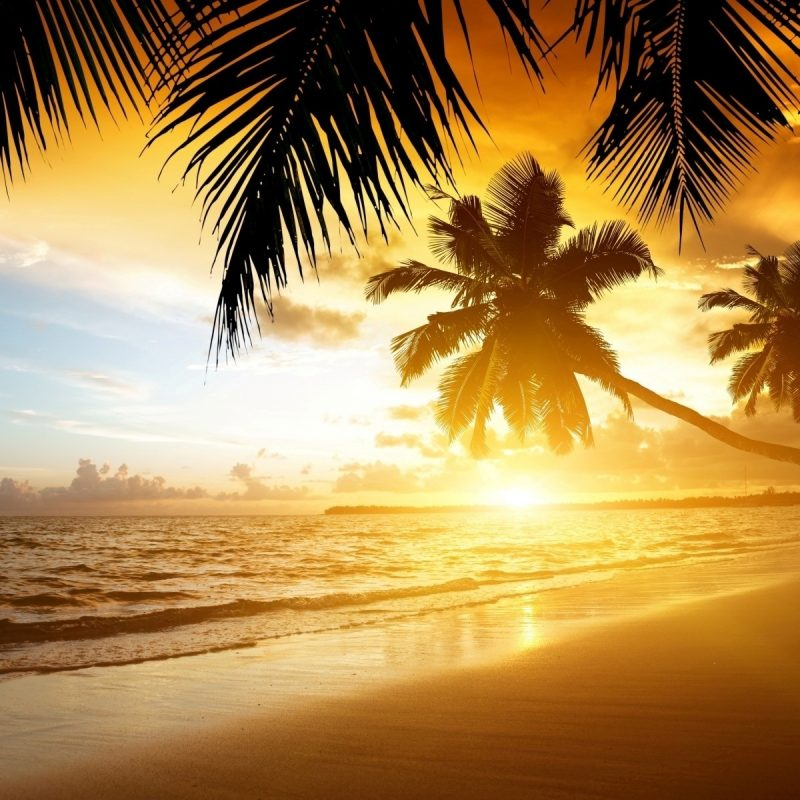 10 Latest Summer Beach Sunset Wallpaper FULL HD 1080p For PC Background 2020 free download beaches beach tropical summer sea palm sand coast nature paradise 800x800