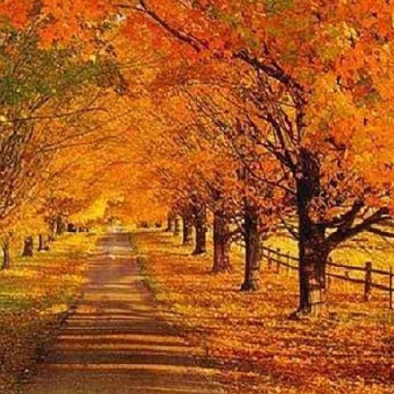 10 Top Autumn Scenes Desktop Wallpaper FULL HD 1920×1080 For PC Background 2018 free download beauteous free pictures of autumn scenes desktop wallpaper fall 800x800