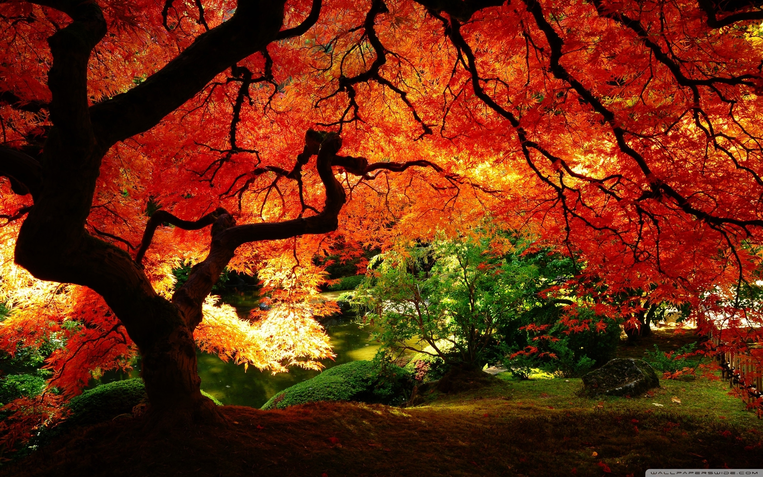 beautiful autumn ❤ 4k hd desktop wallpaper for • dual monitor