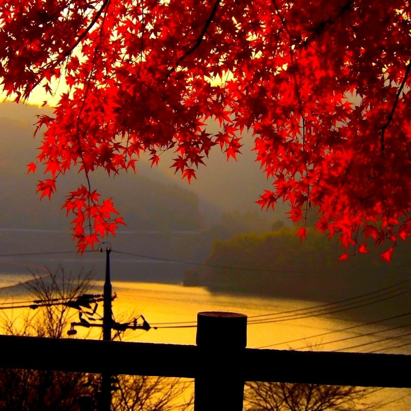 10 New Beautiful Fall Desktop Backgrounds FULL HD 1080p For PC Background 2020 free download beautiful autumn leaves pictures for desktop media file 800x800