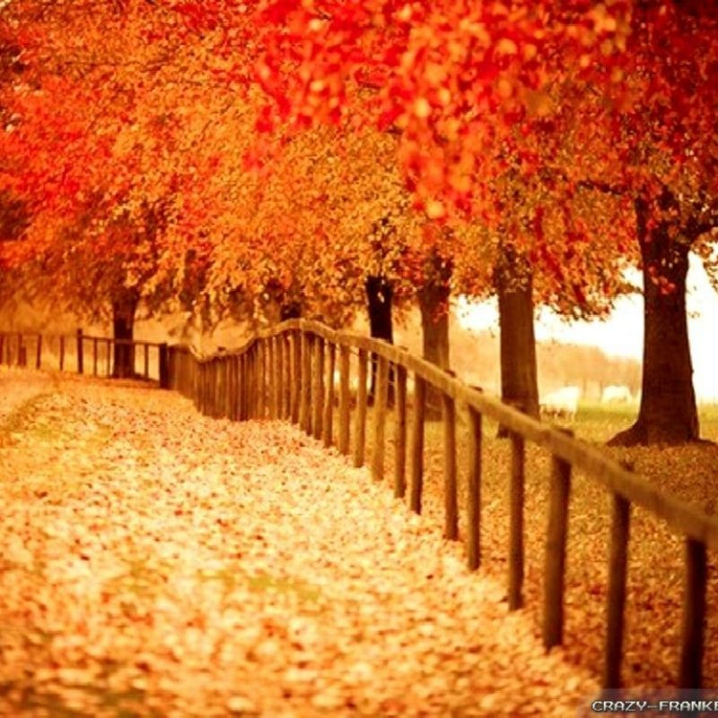 10 Best Free Seasonal Desktop Wallpaper FULL HD 1080p For PC Background 2018 free download beautiful autumn wallpapers 2 seasonal crazy frankenstein 1 800x800
