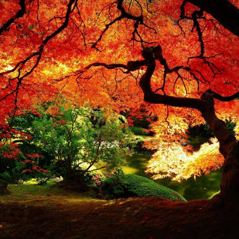 10 New Beautiful Fall Desktop Backgrounds FULL HD 1080p For PC Background 2020 free download beautiful autumn wallpapers wallpaper cave 800x800