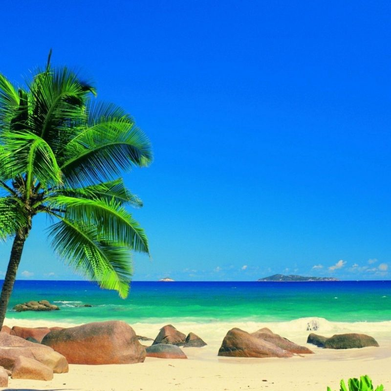 10 Most Popular Beautiful Beach Backgrounds Palm Trees FULL HD 1920×1080 For PC Desktop 2020 free download beautiful beach backgrounds palm trees high definition wallpapers 800x800