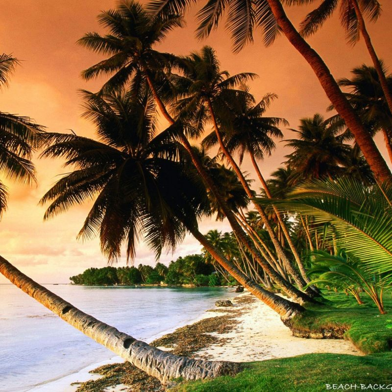 10 Most Popular Beautiful Beach Backgrounds Palm Trees FULL HD 1920×1080 For PC Desktop 2020 free download beautiful beach palm trees on sunset beach wallpapers 800x800