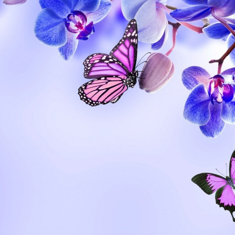 10 Most Popular Beautiful Wallpapers Of Butterflies FULL HD 1920×1080 For PC Desktop 2018 free download beautiful butterfly animal pictures beautiful flowers hd 800x800