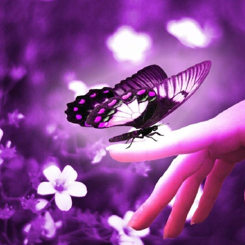 10 Most Popular Beautiful Wallpapers Of Butterflies FULL HD 1920×1080 For PC Desktop 2018 free download beautiful butterfly wallpapers wallpaper cave 800x800