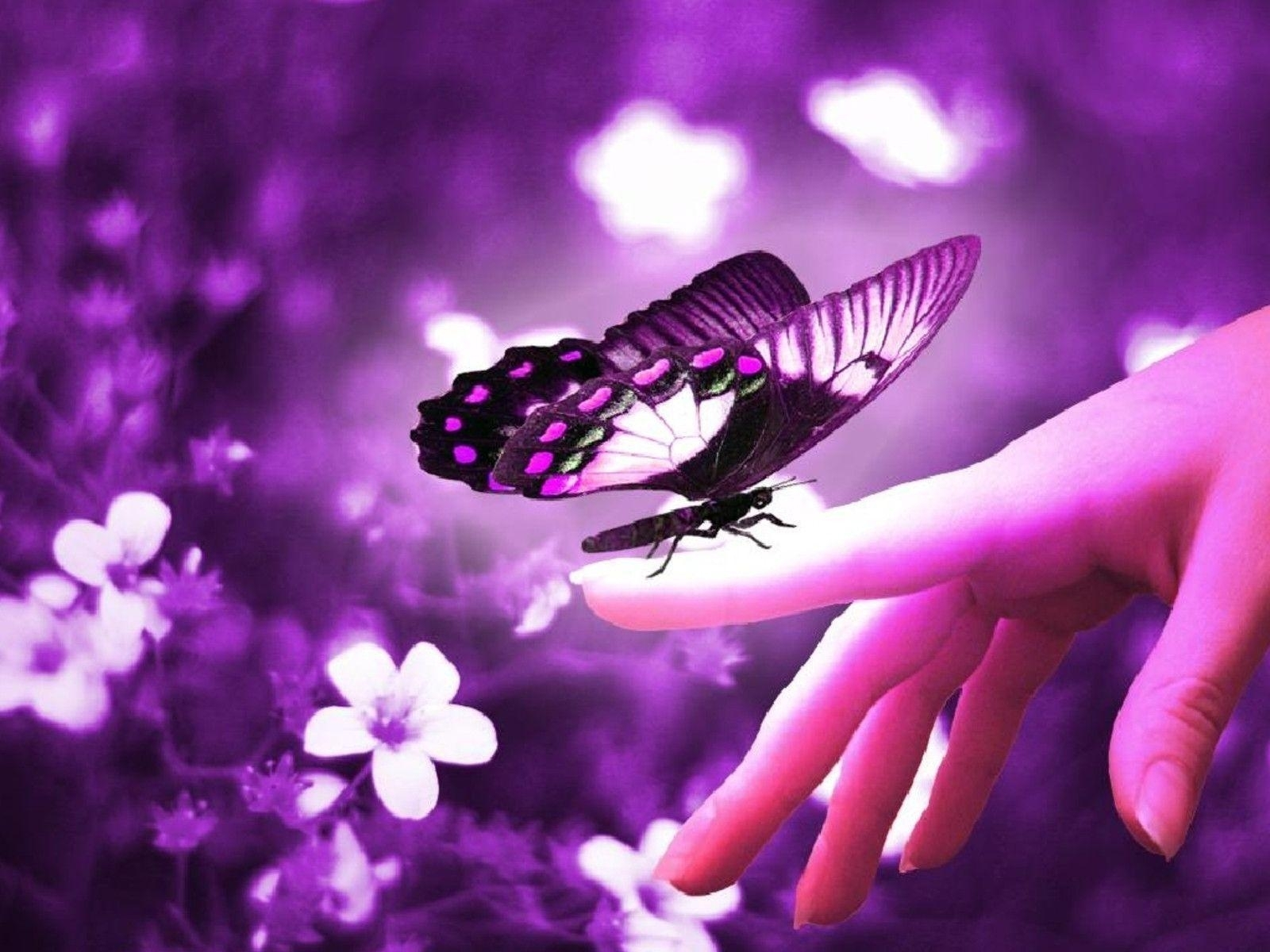 beautiful butterfly wallpapers - wallpaper cave