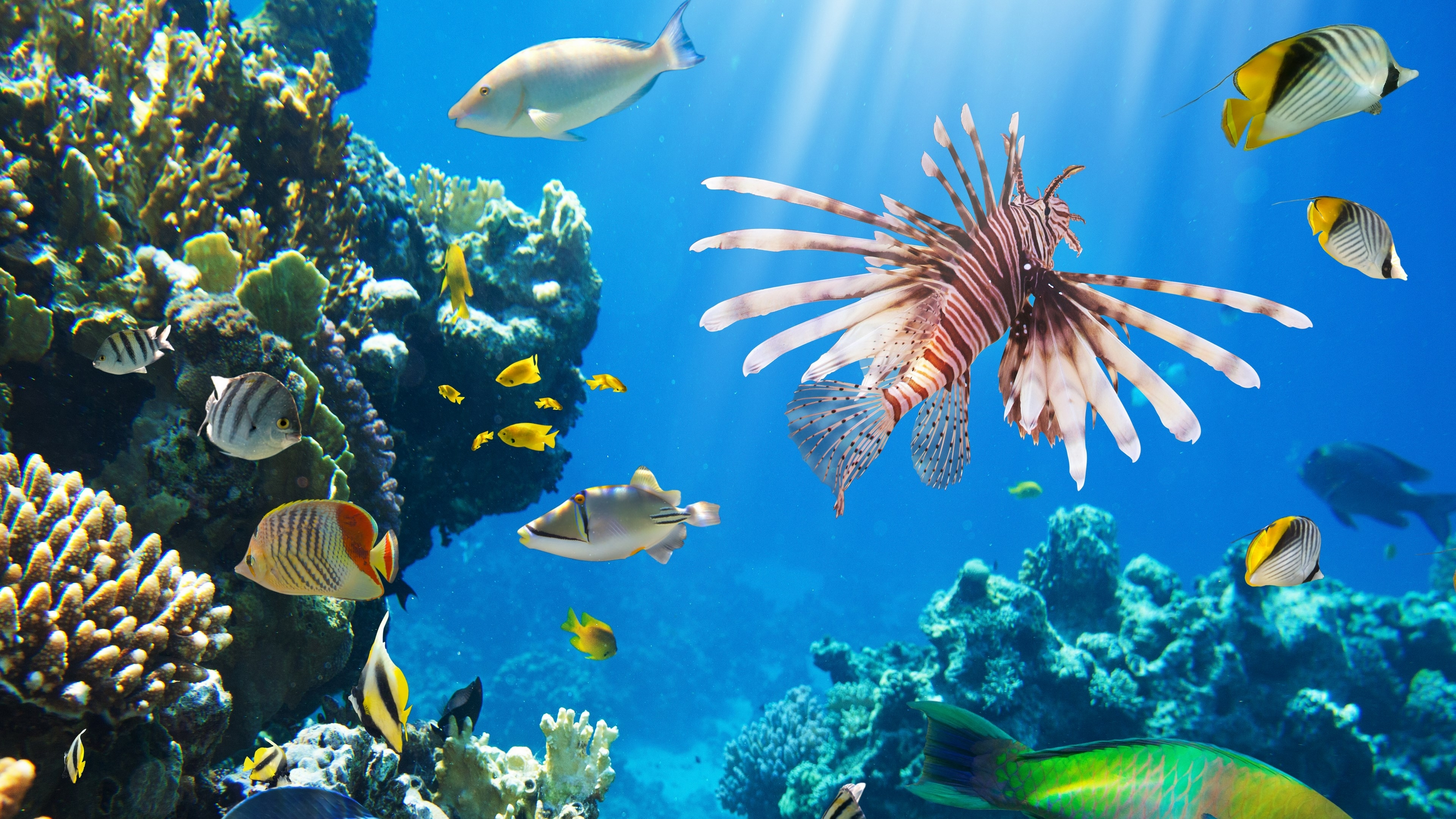 beautiful coral reef wallpapers, coral reef deskto » collections of