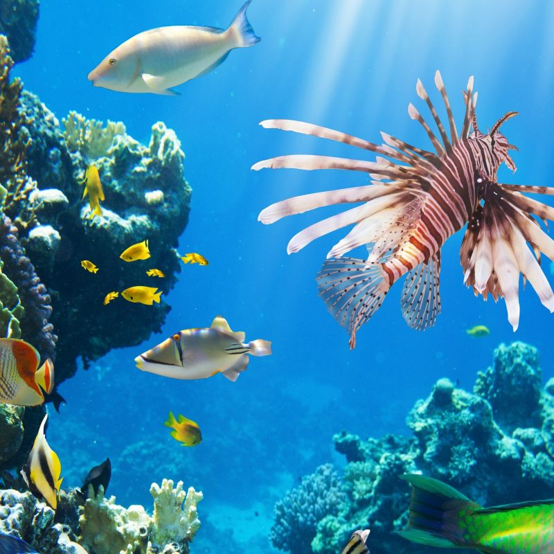10 Most Popular Coral Reef Wallpaper Widescreen Hd FULL HD 1080p For PC Background 2021 free download beautiful coral reef wallpapers coral reef deskto collections of 800x800