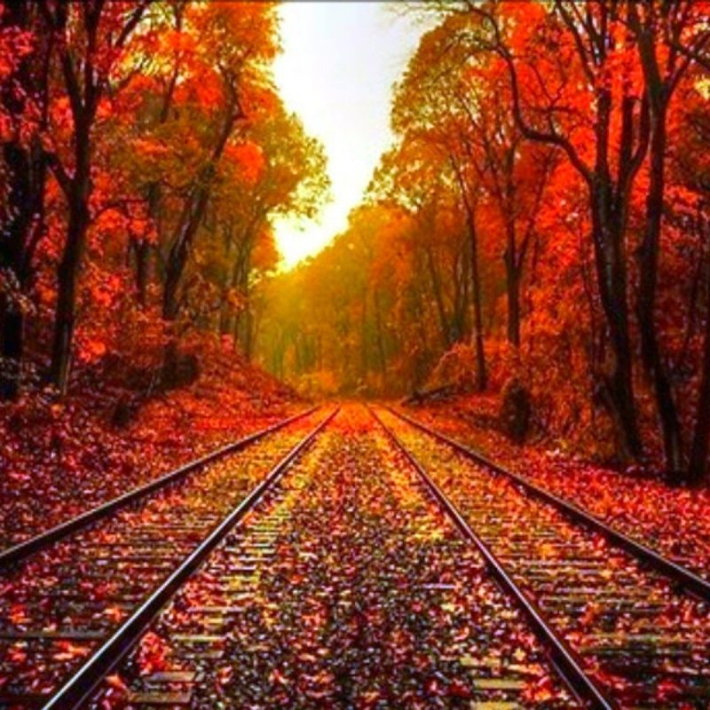 10 Best Fall Backgrounds For Pictures FULL HD 1080p For PC Background 2018 free download beautiful fall pictures beautiful autumn wallpaper desktop 1 800x800
