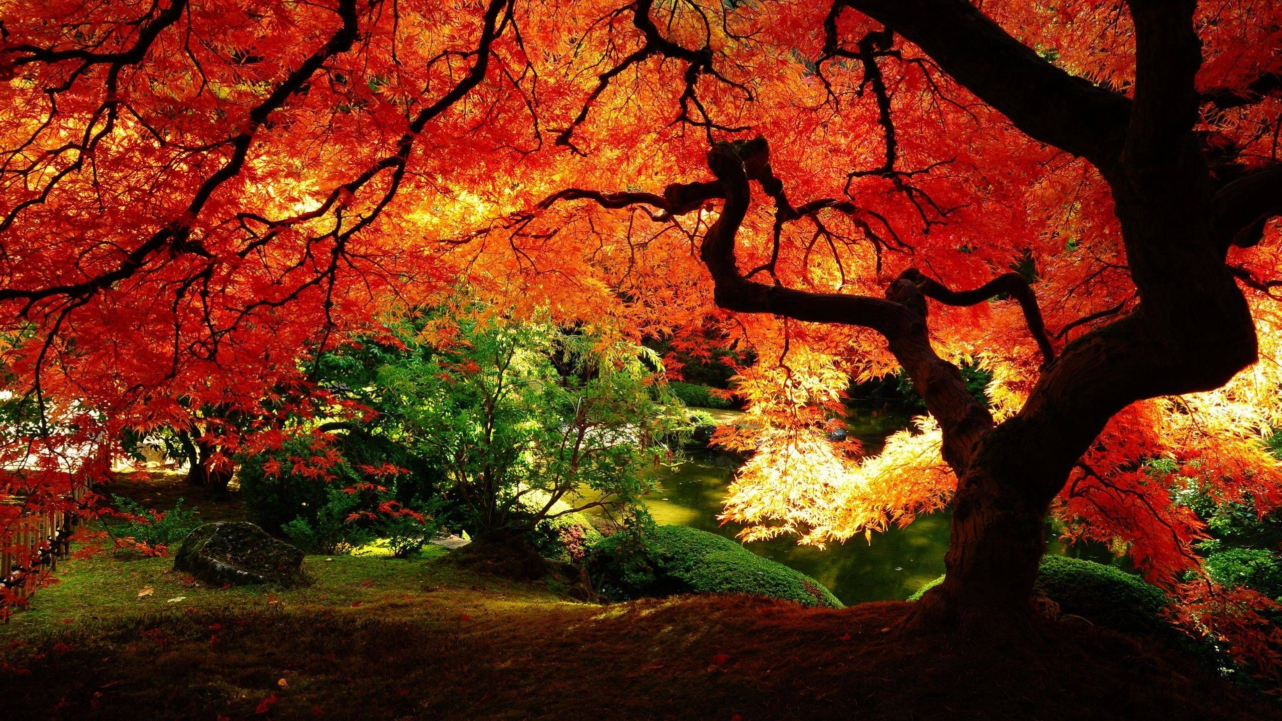 beautiful fall wallpapers - wallpaper cave