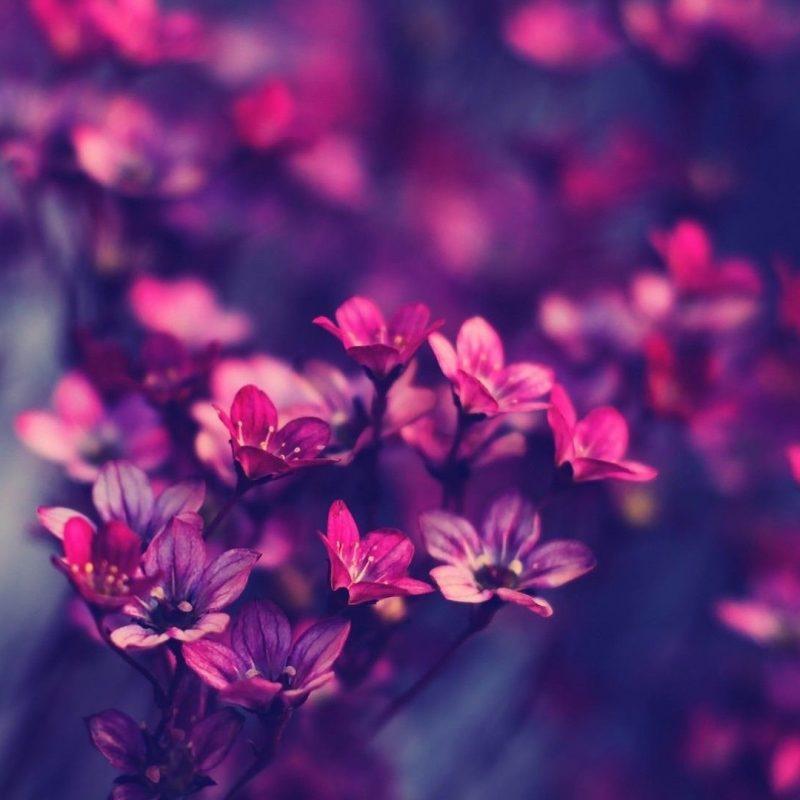 10 Latest Desktop Wallpaper Hd Flowers FULL HD 1920×1080 For PC Background 2020 free download beautiful flower wallpaper hd 07639 baltana 2 800x800
