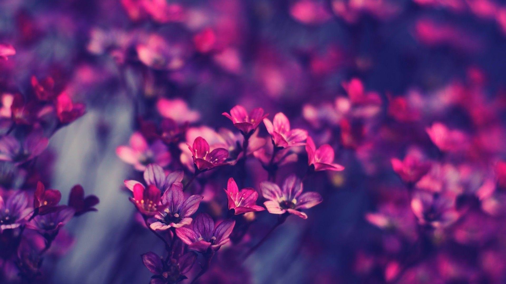beautiful flower wallpaper hd 07639 - baltana