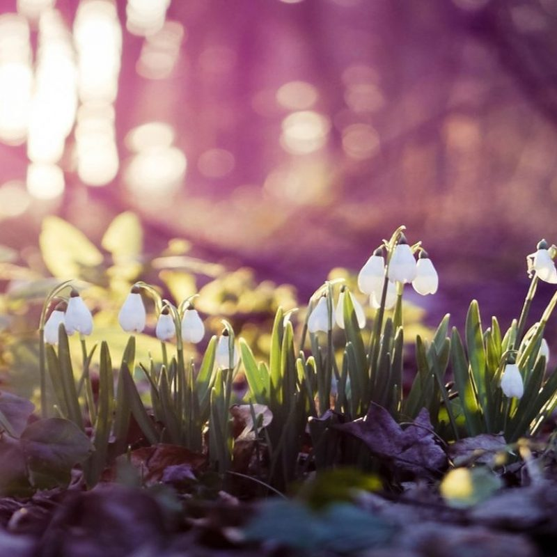 10 Latest Early Spring Pictures Desktop Background FULL HD 1080p For PC Background 2020 free download beautiful free spring wallpapers to bring you joy 3d wallpapers 800x800