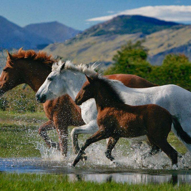 10 New Beautiful Horses Pictures Wallpapers FULL HD 1920×1080 For PC Desktop 2020 free download beautiful horses on the beach beautiful horses wallpapers rar 800x800