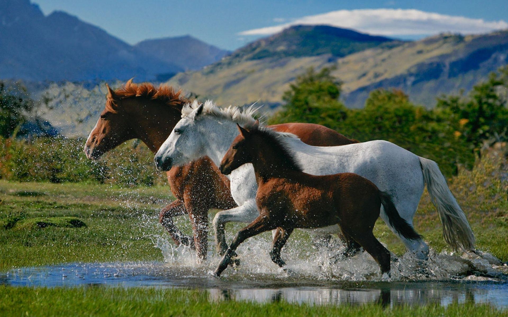 beautiful horses on the beach   beautiful horses wallpapers.rar
