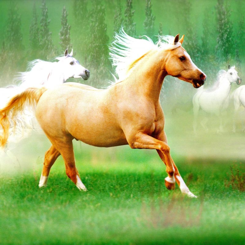 10 New Beautiful Horses Pictures Wallpapers FULL HD 1920×1080 For PC Desktop 2020 free download beautiful horses pictures wallpapers impremedia 800x800