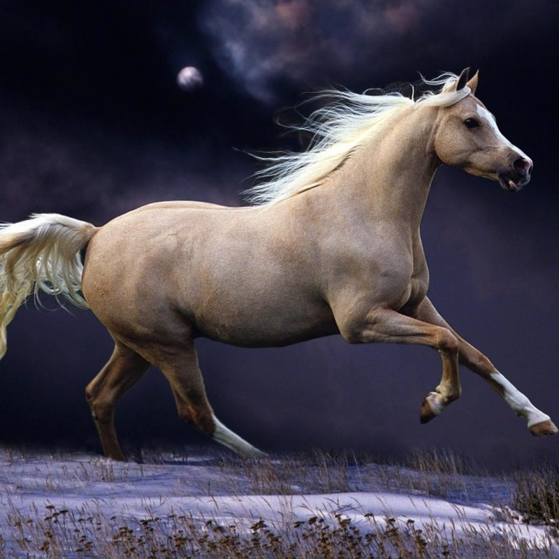 10 New Beautiful Horses Pictures Wallpapers FULL HD 1920×1080 For PC Desktop 2020 free download beautiful horses running hd desktop background 800x800