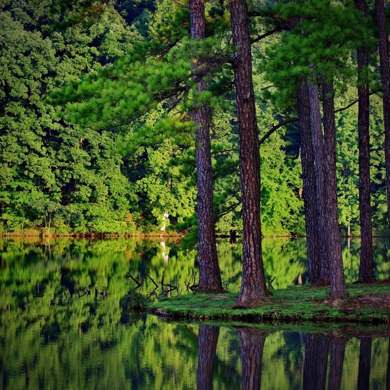 10 Top Forest Wallpaper Full Hd FULL HD 1080p For PC Desktop 2018 free download beautiful lake on nature forest wallpaper full 5314 wallpaper 800x800