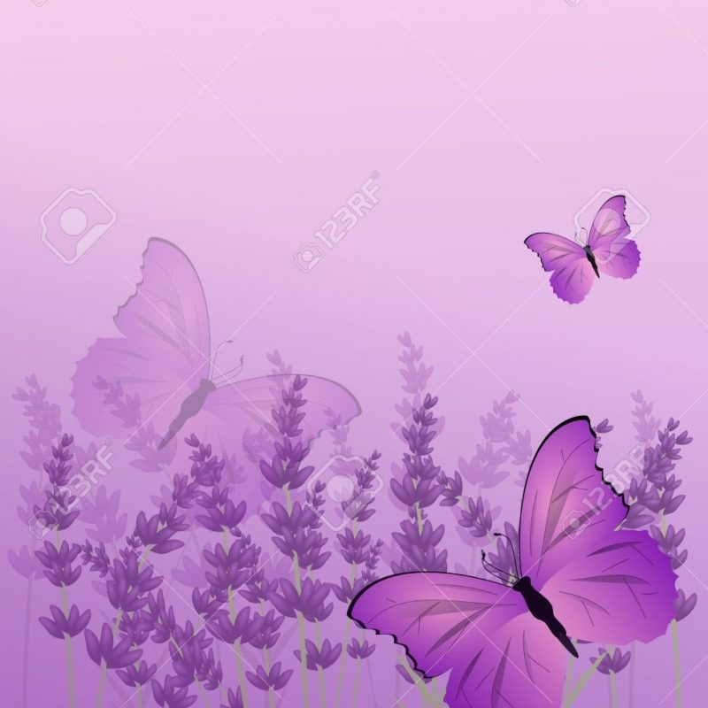 10 New Purple Butterfly Background Images FULL HD 1920×1080 For PC Desktop 2018 free download beautiful lavender background with purple butterfly vertical stock 800x800