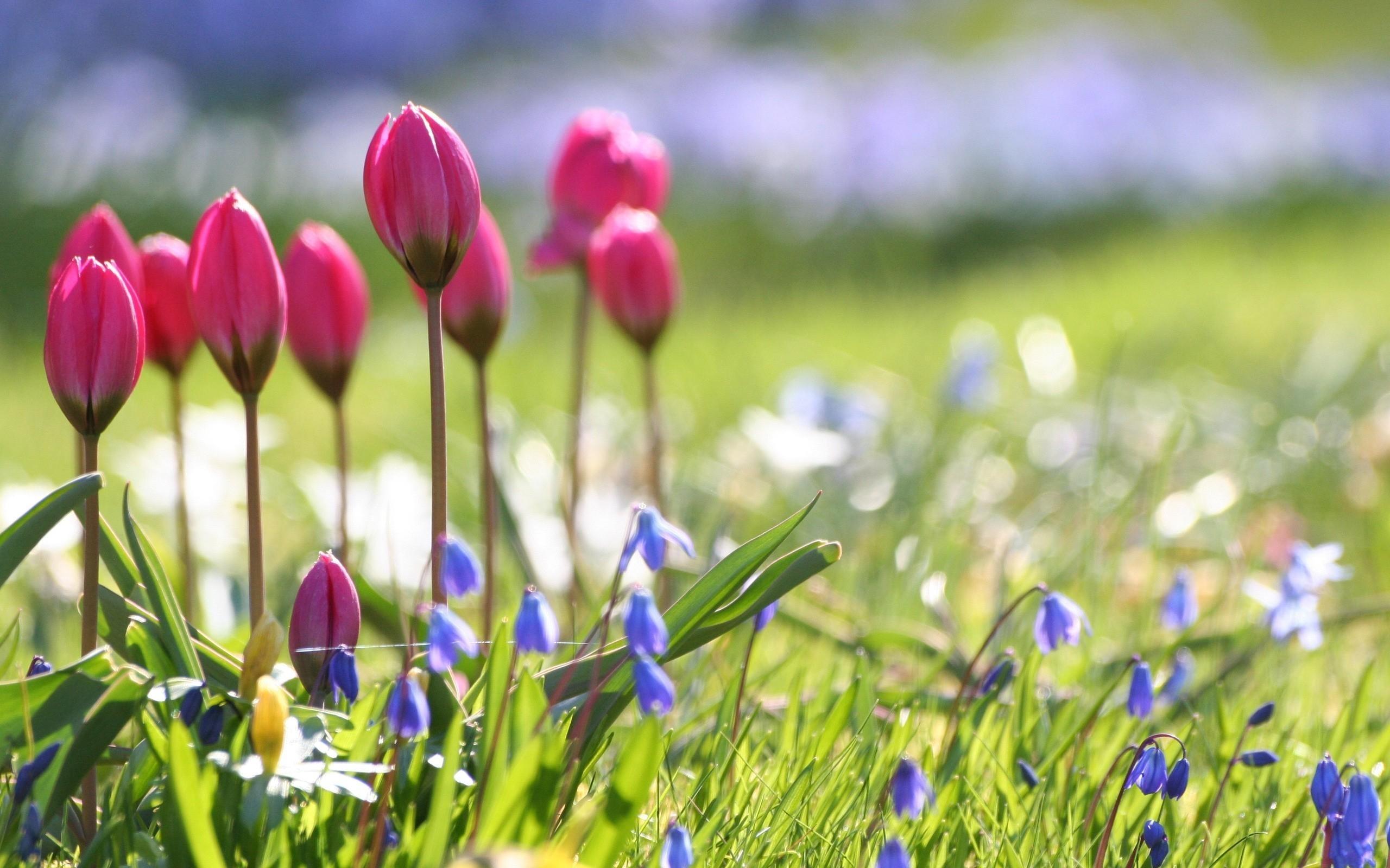beautiful nature spring flower wallpaper. - media file | pixelstalk
