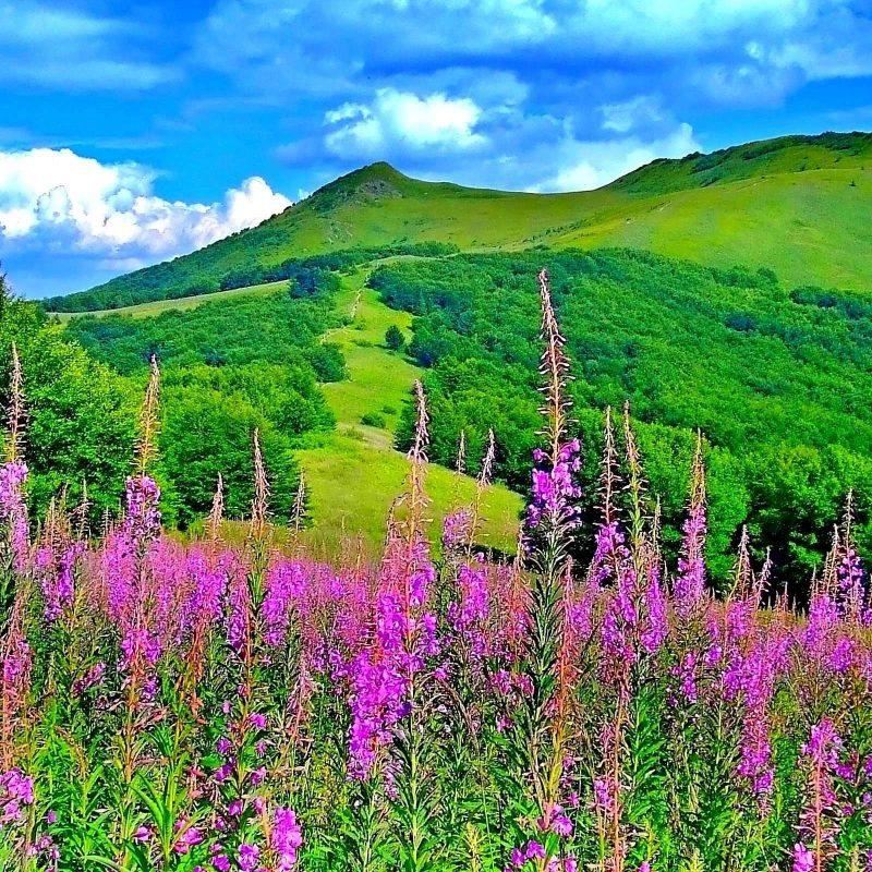 10 New Beautiful Nature Wallpaper Spring FULL HD 1080p For PC Desktop 2018 free download beautiful nature spring wallpaper hd pictures 4 hd wallpapers 800x800
